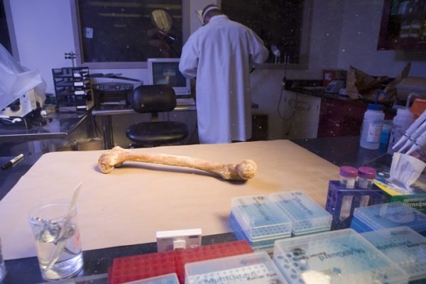 Bone Testing for DNA identification